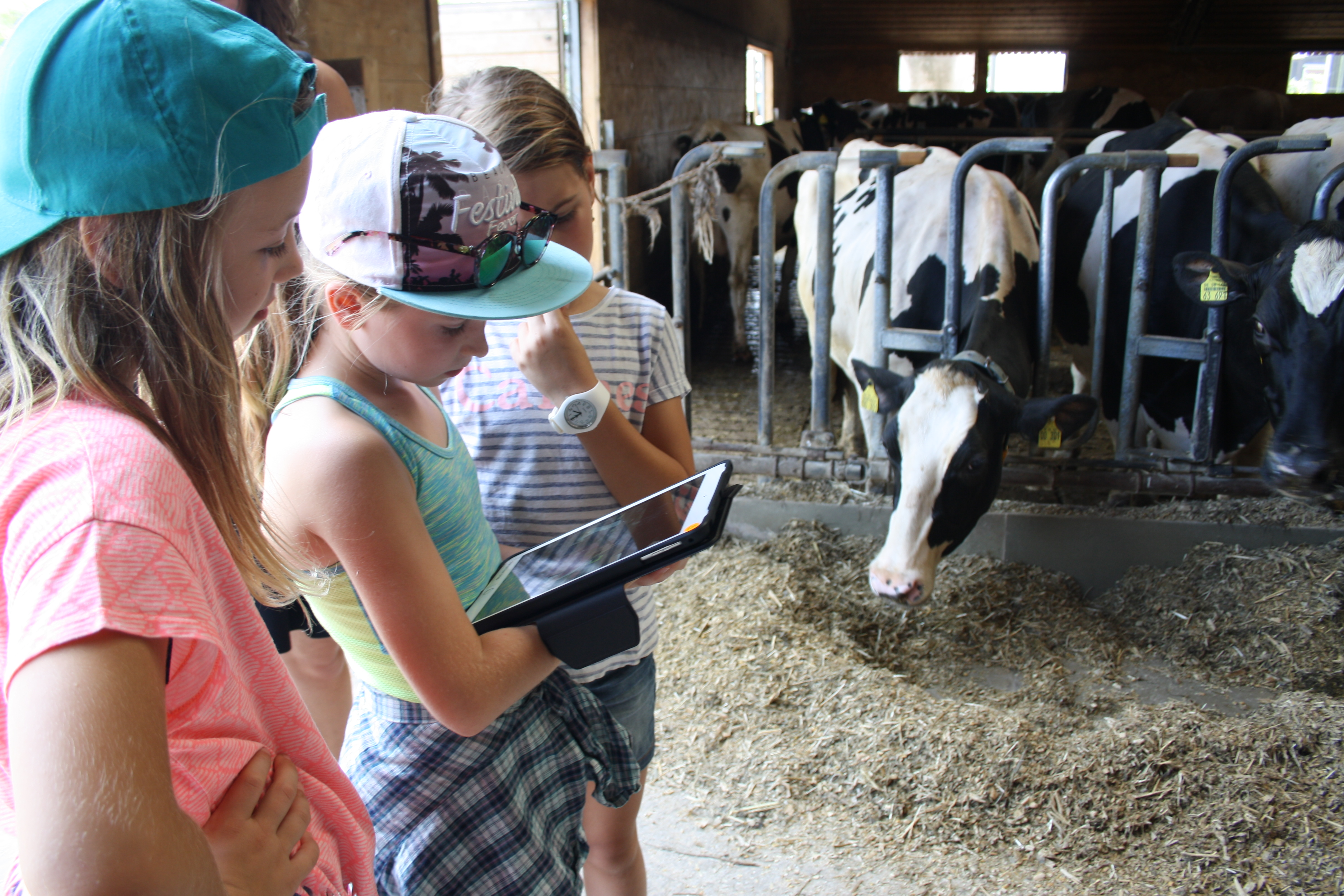 Where does the milk come from? Digital scavenger hunt in the cowshed.