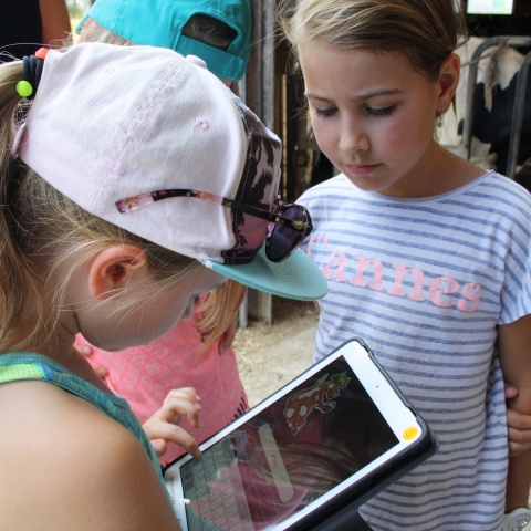 Digital scavenger hunt in the cowshed: The project conveys knowledge in an exciting way.